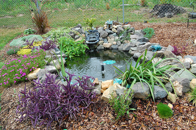 Water features and pond maintenance